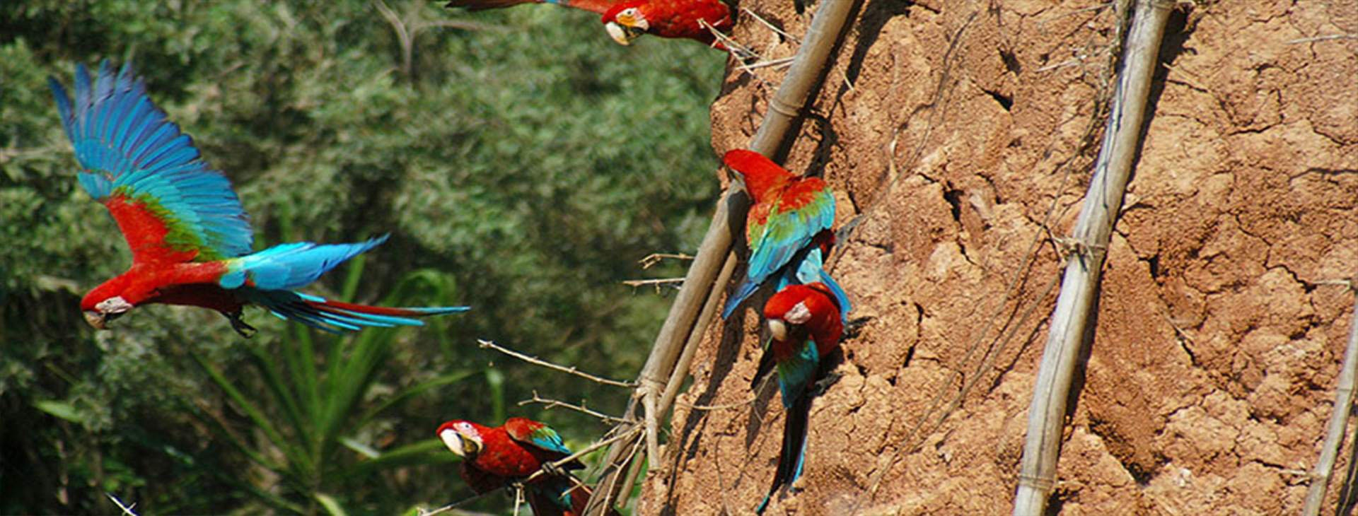 Amazon Tour Sandoval Lake 2dias - Amazon Wildlife Peru Travel