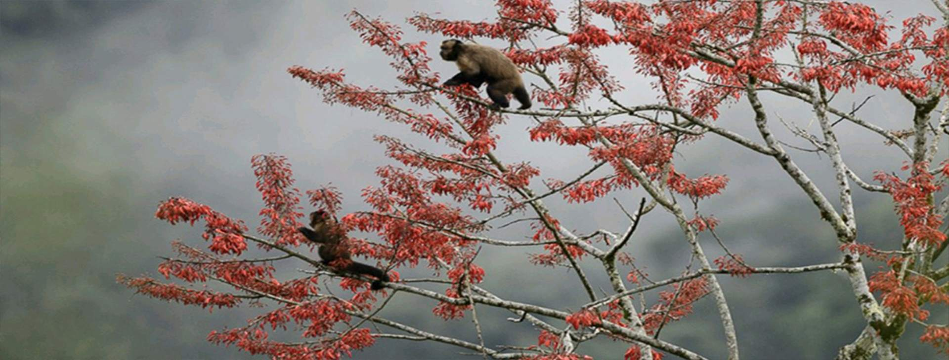 Amazon Wildlife 3dias - Amazon Wildlife Peru Travel