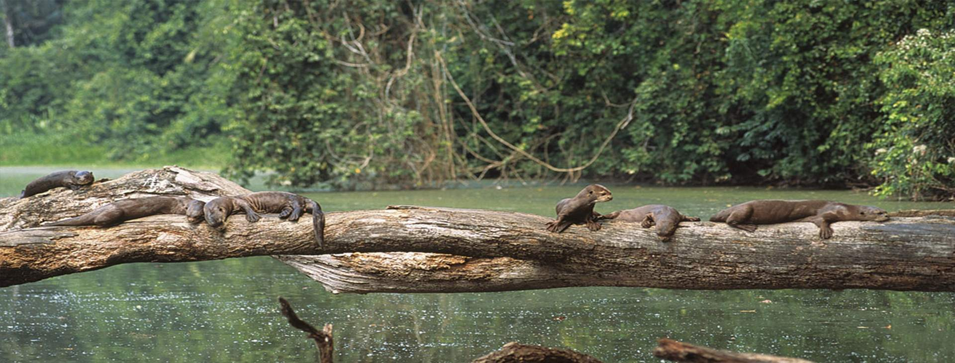 Amazon Adventure 3dias - Amazon Wildlife Peru Travel