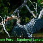 amazon peru sandoval lake lodge