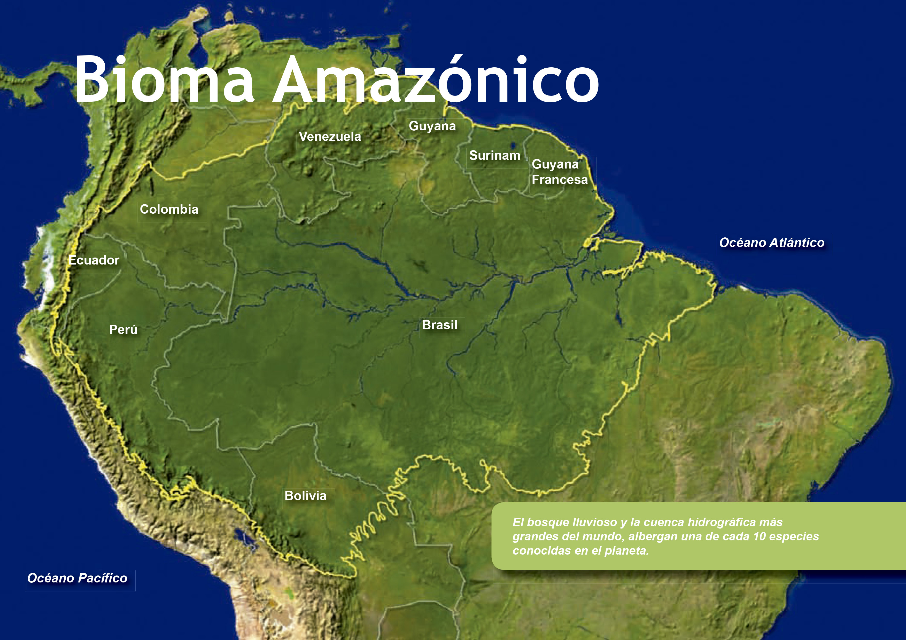 Amazon live - amazon peru - amazon nature peru - tambopata amazon - amazon wild - amazon wildlife