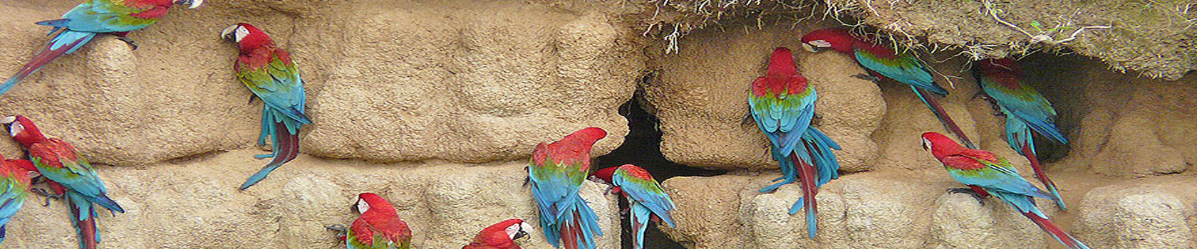 Manu Park Macaw Clay Lick - Amazon Wildlife