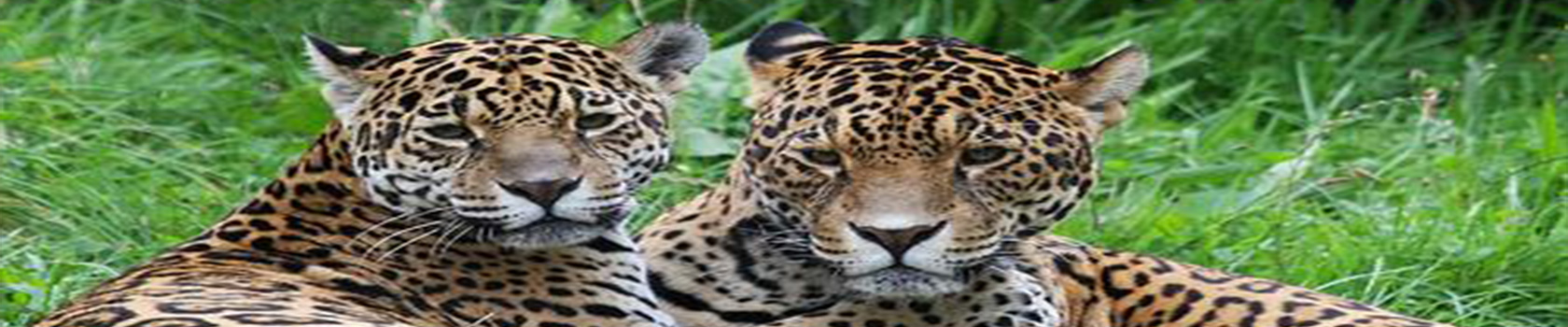 Tambopata Expeditions Reserved and Sandoval Lake - Amazon Wildlife